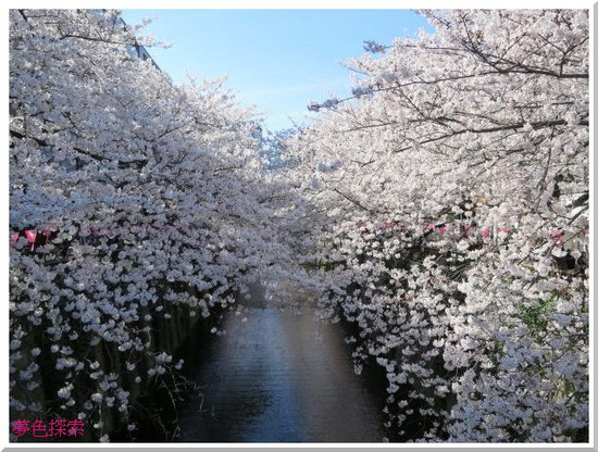 Megurogawa140331